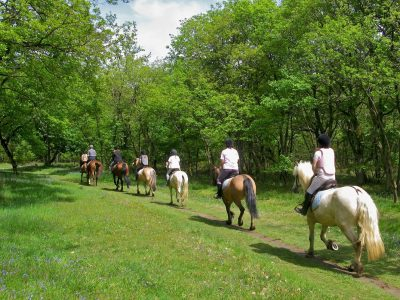 Courses and horseback riding